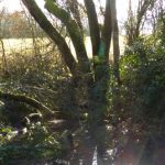 Trees at Wapley Bushes