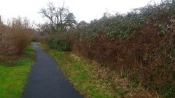Hedge at Lilliput Park