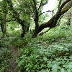 Trees at Wapley Bushes Nature Reserve