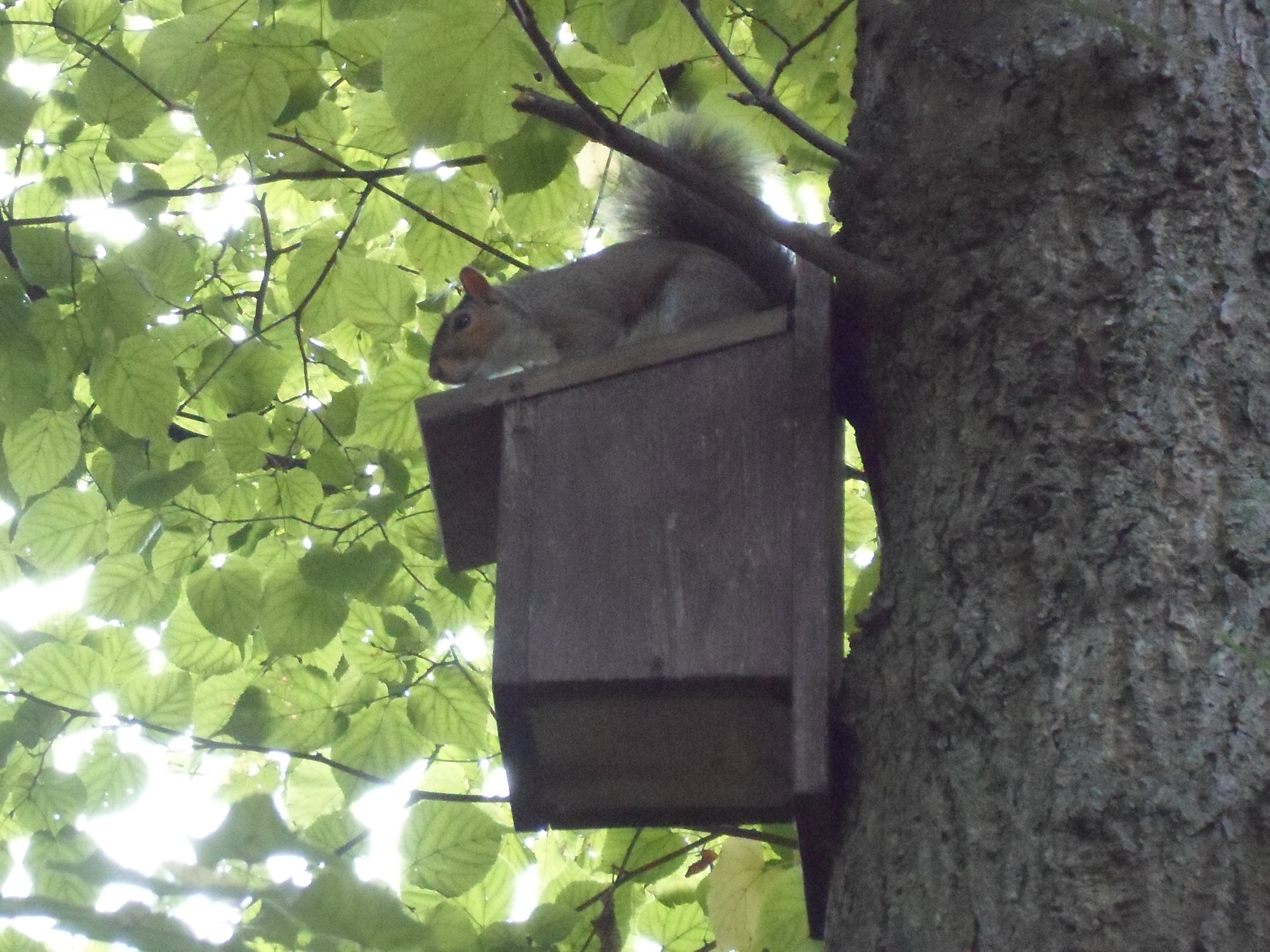 squirrel on nestbox