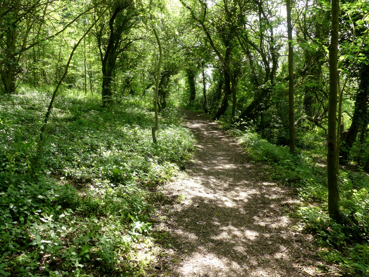 Trees and path in Wapley Bushes Nature Reserve