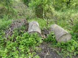 Logs in woodland